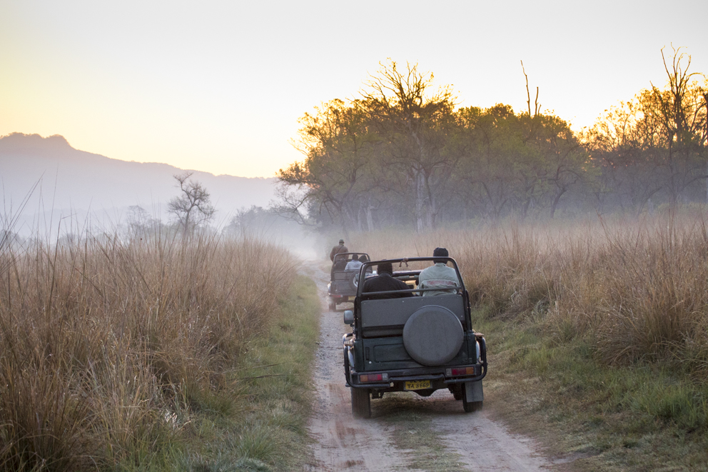 Tiger safari in Jim Corbett Tiger Reserve