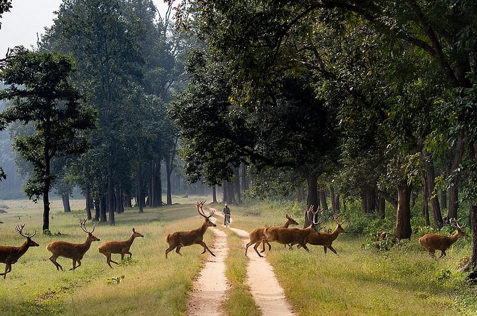 Solo female travel in India : the wildlife experience