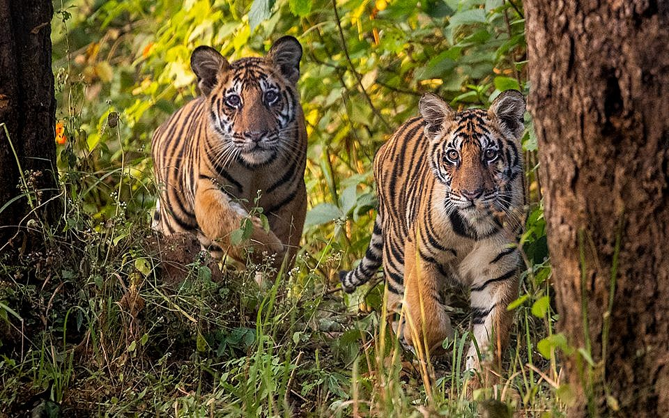 ULTIMATE GUIDE TO KANHA TIGER RESERVE