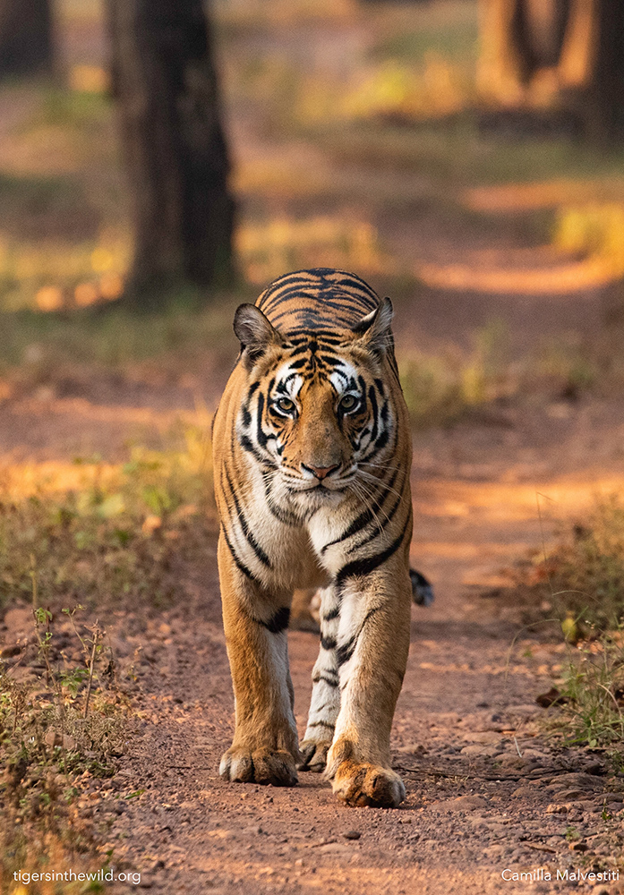 tips for wildlife photography in India