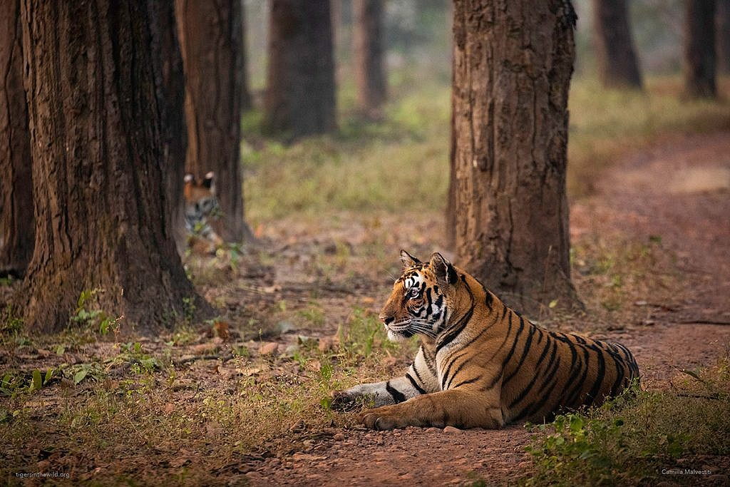 Best books about tigers