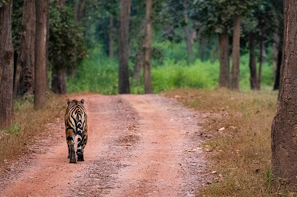Kanha Tiger Reserve : a season's flashbacks