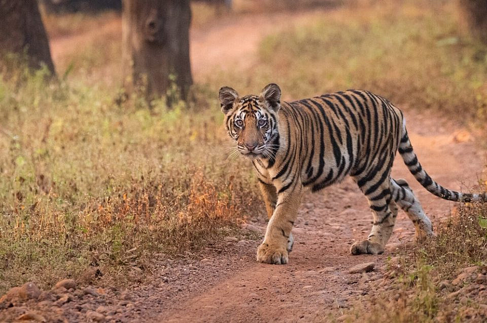TIGER SAFARIS WITH CHILDREN IN INDIA